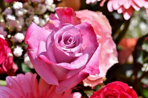 rose-3507330_1280