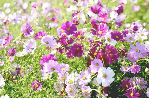 flowers-1008661_1280