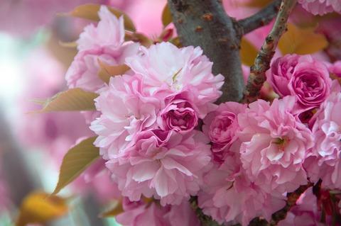 pink-4110668_1920