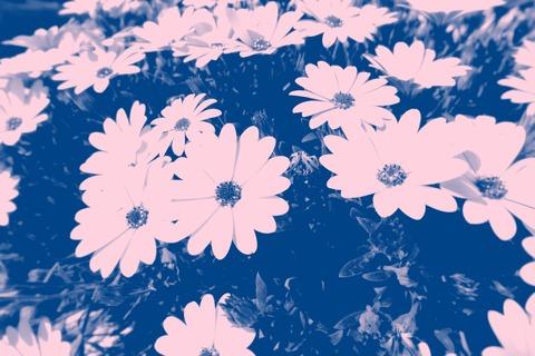 blue-photo-of-petaled-flowers-937789