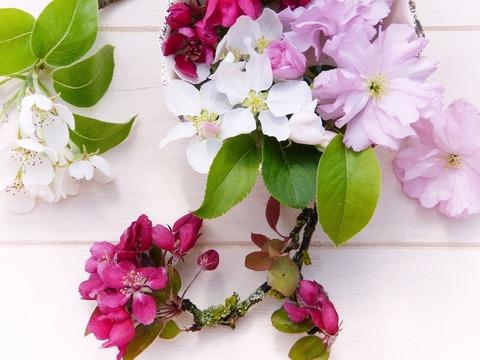 flowers-3351869_1920