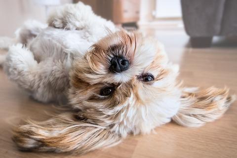 dog-2785077_1280