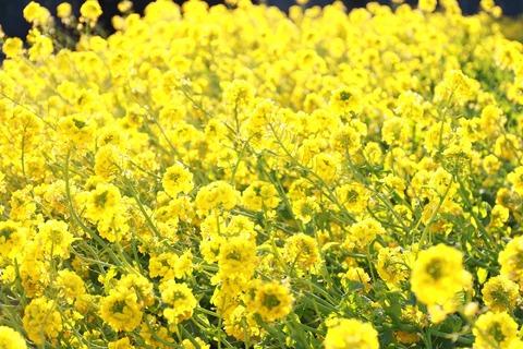 flower-1168004_1280