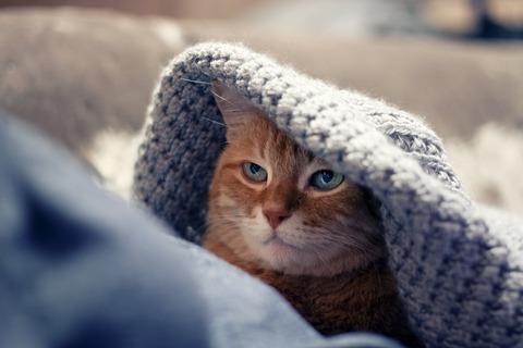 cat-4027638_1280