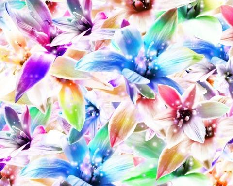 orchids-89428_1280