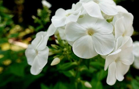flower-3540512_1280