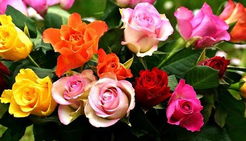 roses-2911123_1280