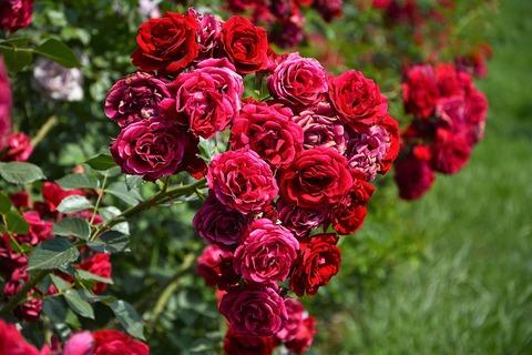 flower-3073715_1280