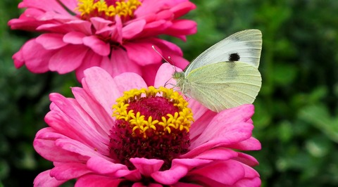 butterfly-3848152_1920
