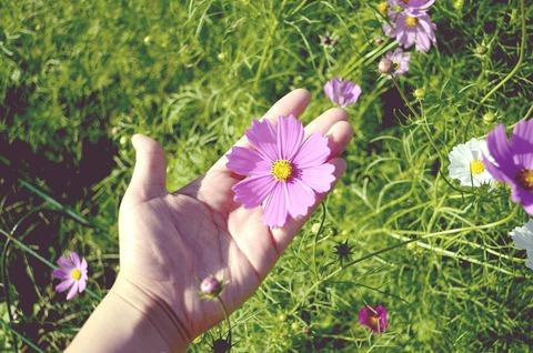 flower-garden-1008668_1280