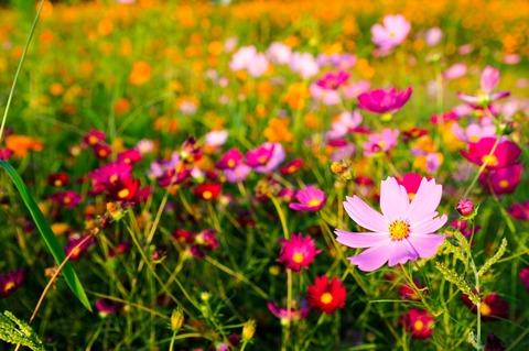 autumn-4008537_1280