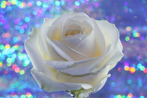 rose-3957671_1280