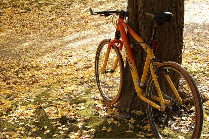 秋も終わり 清澄公園にて