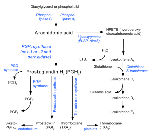 栴檀海斗の生体皮膜は分解酵素の遊離を止め融解をストップします。この作用が、細菌やウイルス感染を拡大させず重要諸臓器を守る為に必須です。