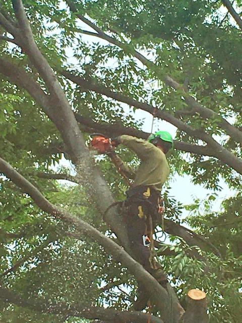 樹上作業2 (1)