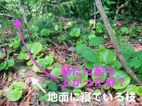 IMG_9328のコピー (1)