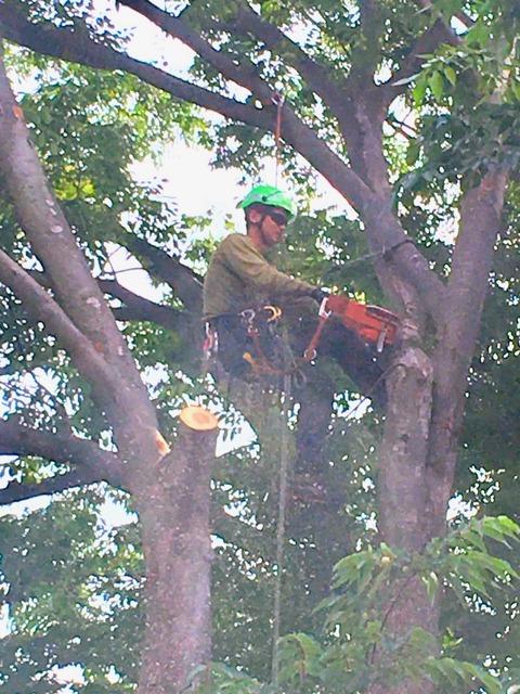 樹上作業1