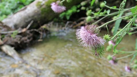渓流の植物_20210815