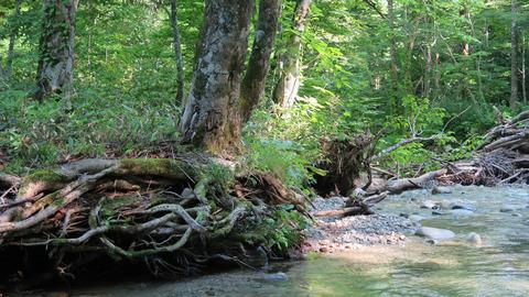 20200723木漏れ日と渓流
