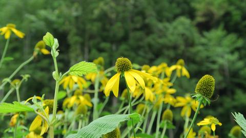 林道の植物_20200823