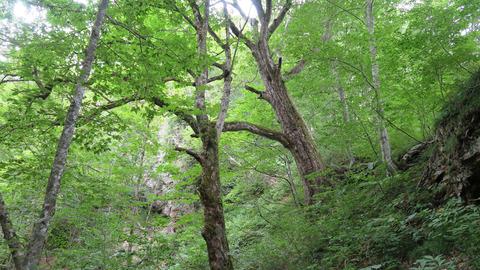 大きな木_20210815