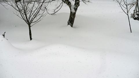 20201230雪