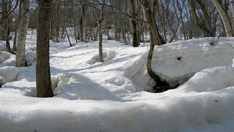 渓流の雪2_20210320