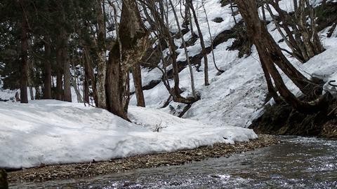 20190414雪景色の渓流