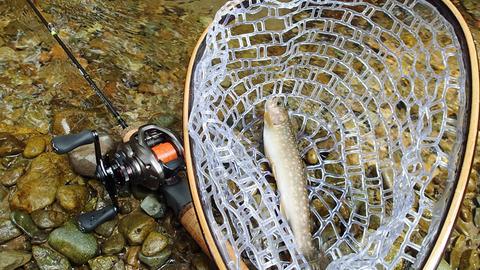ベイトと岩魚