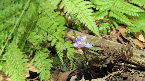 20200404春の植物