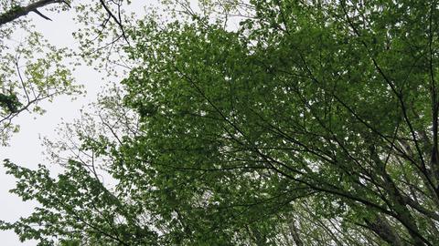 20200516林道