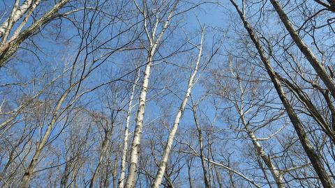 3月の林_20210327
