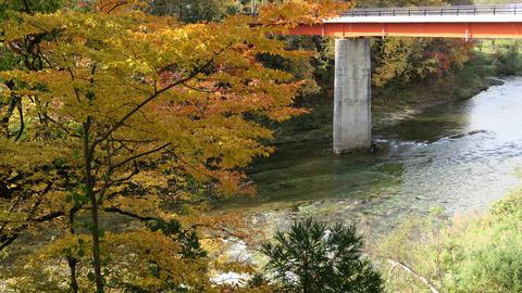 和賀川と紅葉20201101_1
