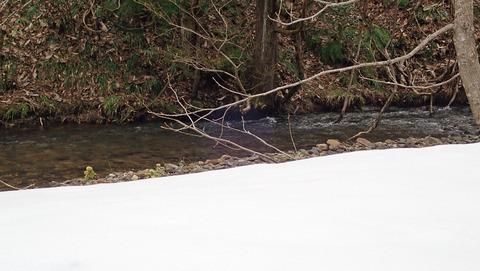 20200412渓流の積雪