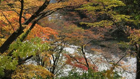 和賀川と紅葉20201101_2