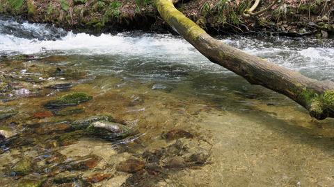 20200404岩魚1尾目のポイント