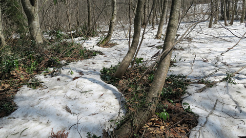 渓流の積雪_20210327