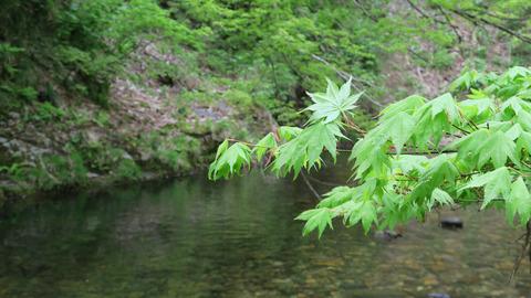 20200516和賀川水系1