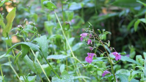 渓流の植物_20210912