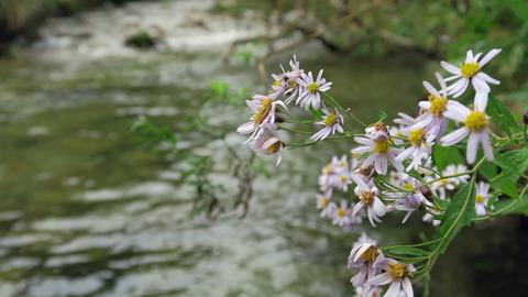 渓流の植物_20200926