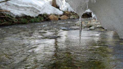渓流のツララ_20210320