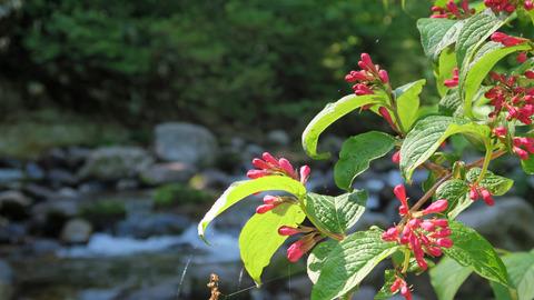 20200530渓流の植物