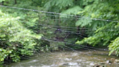 20200705蜘蛛の巣