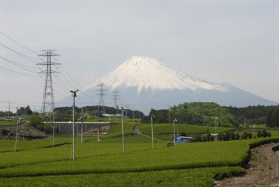 富士山_1597芝桜・菜の花・茶畑