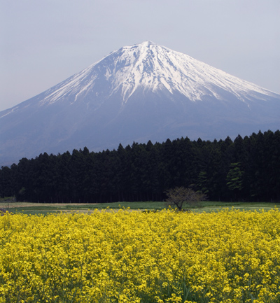 富士山_1574b芝桜・菜の花・茶畑