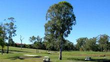 オールドルーキー へぼゴルファーMASA-parkwood