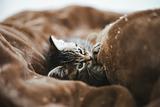 tomcat1576_TP_V