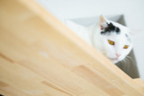 cat126IMGL5555_TP_V1