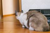 cat9302342_TP_V