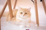 cat458A7444_TP_V